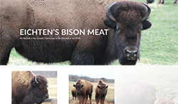 Eichten's Bison Buffalo